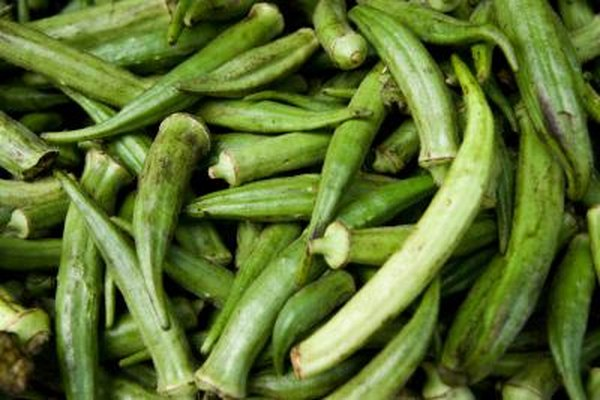 How To Grow Spineless Okra Home Guides Sf Gate