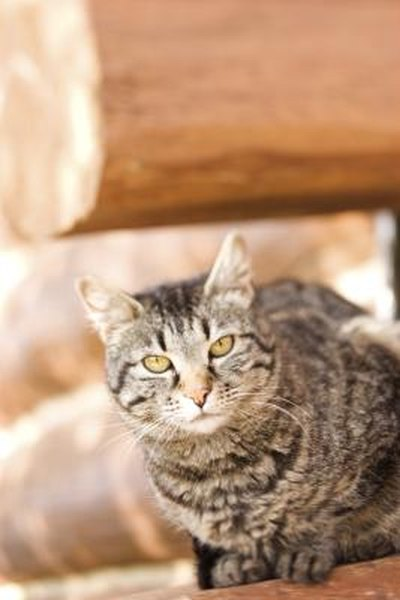 what to do if your cat bites you