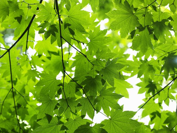 Plants exhale oxygen.