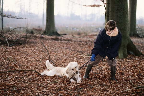 Dogs eating dirt, leaves and sticks may have a nutritional deficiency.