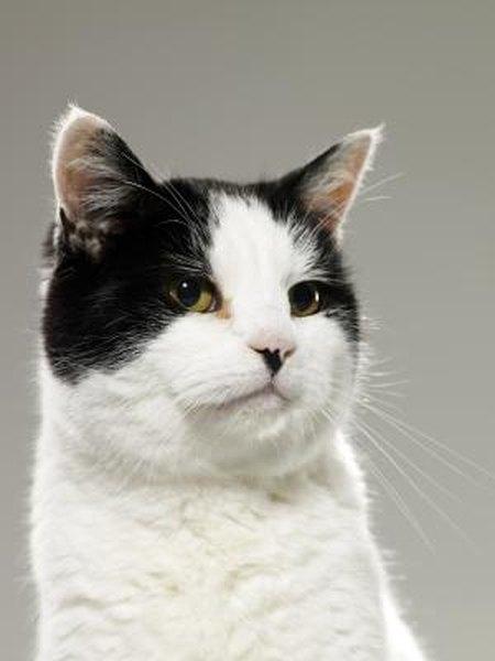 Normal Ear Wax In Cats Pets