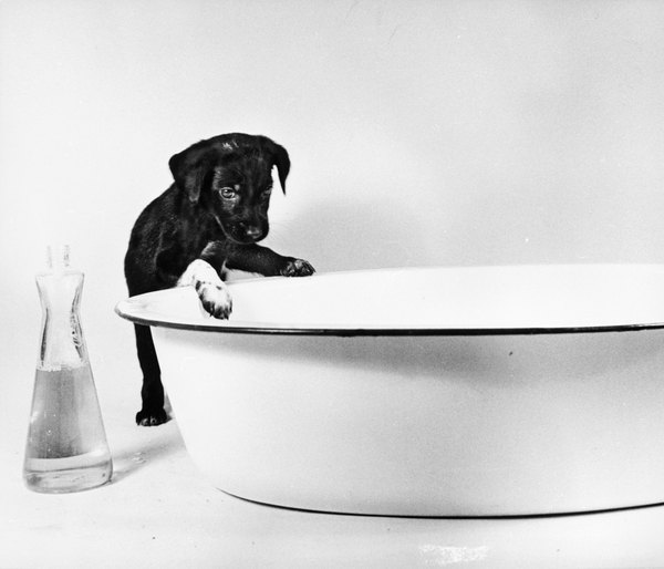 Puppies need TLC even in the bath.