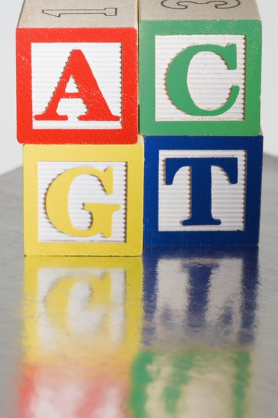 A, C, T and G are used by scientists to write out DNA sequences