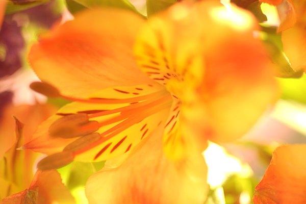 Flores para tu ventana.