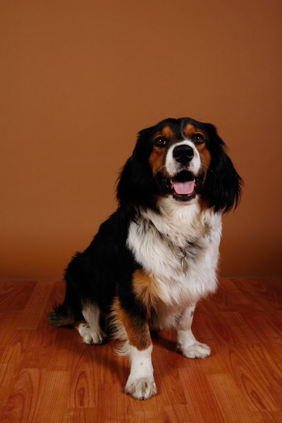 How To Prevent Dog Scratches On Hardwood Floors Pets