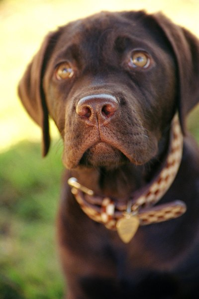 Dogs will learn to associate uncomfortable sounds with unwanted behavior.