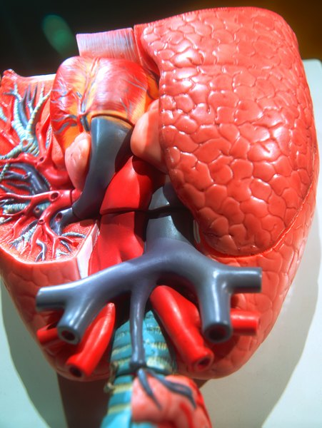 What Does the Circulatory System Carry to Cells? | Education ...