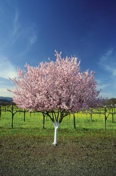 The Best Fungicide for Fruit Trees | Home Guides | SF Gate