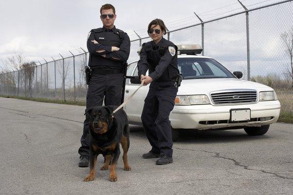 El cine ha ayudado a crear la imagen de un perro violento.