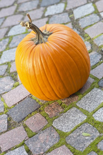 Tranform that plain pumpkin into a tasty treat for your canine companion.