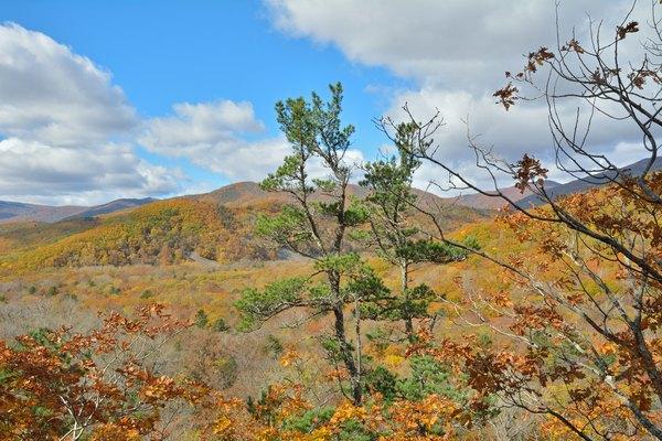 Cedar pine in a taiga landscape