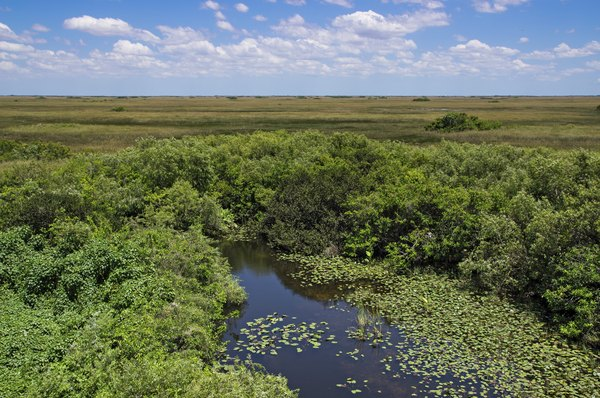 The Florida Everglades are a flooded grassland biome.