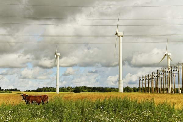 A cow stands under wires with turbines in the distance.