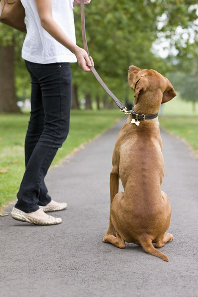 Keep your pup on a leash around other dogs during socialization.