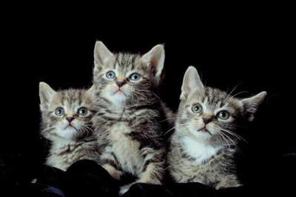 free kittens grand rapids mi