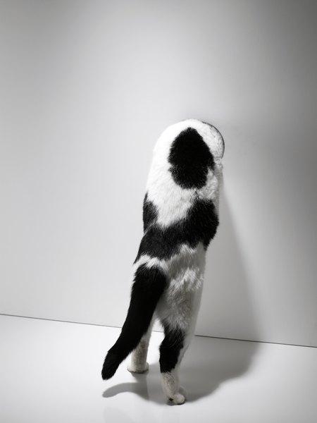Scratching Is A 100 Percent Normal Feline Behavior