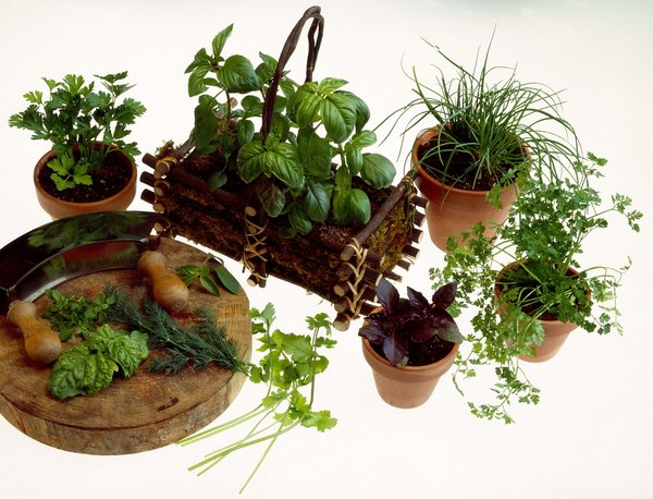 Potted herbs add small doses of vitamins to your food.