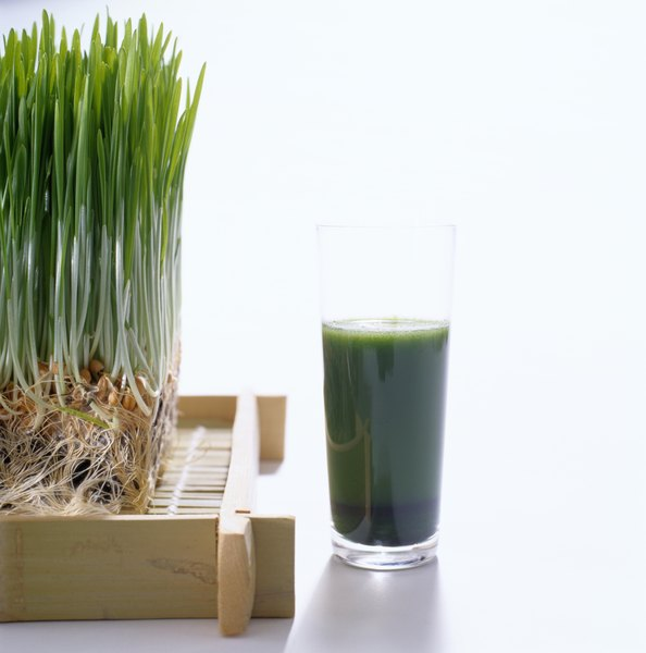 Your pet can benefit from nutrients found in wheat grass.