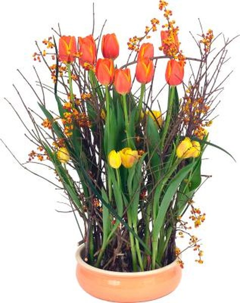 Can You Save Potted Tulip Bulbs?   Home Guides   SF Gate Dry Garden Design With Pot Html on herb gardens designs, potted plant designs, flower pot designs, pot people designs, pinch pot designs, potted vegetable garden designs, diy garden designs, dish gardens designs, box gardens designs, water garden designs, indoor garden designs, mosaic pots designs, garden planters designs, garden trellis designs, rock gardens designs, stone gardens designs, patio pot designs, container gardens designs, garden gate designs, flower garden designs,