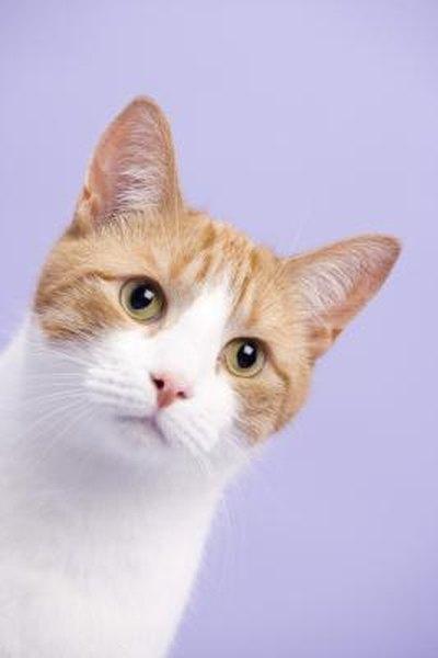 cat 39 s eye color types pets. Black Bedroom Furniture Sets. Home Design Ideas