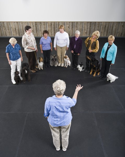 "You'll learn the signal for ""down"" and other commands at a basic obedience class."
