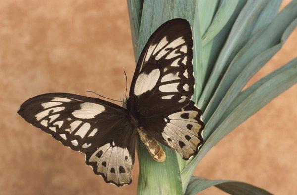 Atrae aves y mariposas a tu jardín.