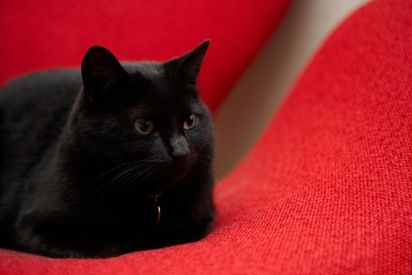 does luxating patella in a cat heal itself pets
