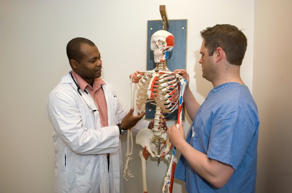 Doctors studying human skeleton