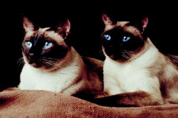 Amoxicillin vs clavamox for cats pets for Fish mox for cats