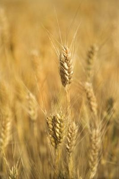 Commodities include agricultural products such as wheat.