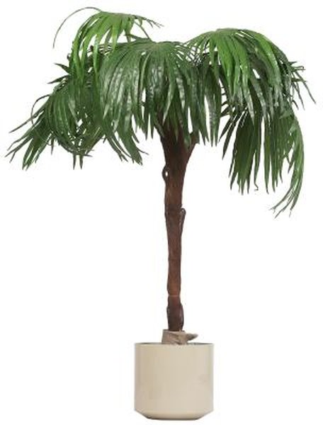 How To Grow A Palm In A Pot Home Guides Sf Gate