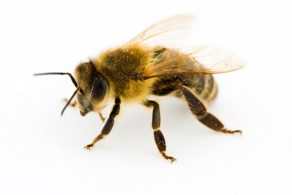 What Happens to Bees & Wasps at Night?