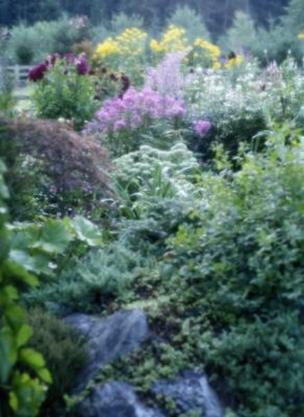 What Vegetables Can You Plant in Borders? | Home Guides | SF