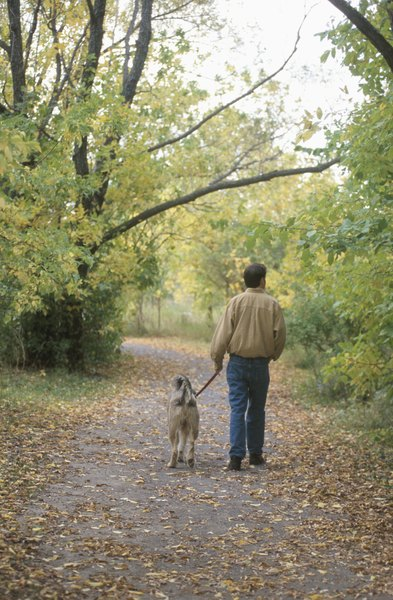 With a Gentle Leader, your dog knows you're in charge.