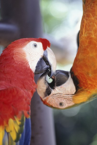 What Do The Letters Numbers Mean On A Parrot Leg Band Pets