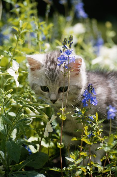 In Your Cat S Mind The Garden Makes A Perfect Outdoor Litter Box