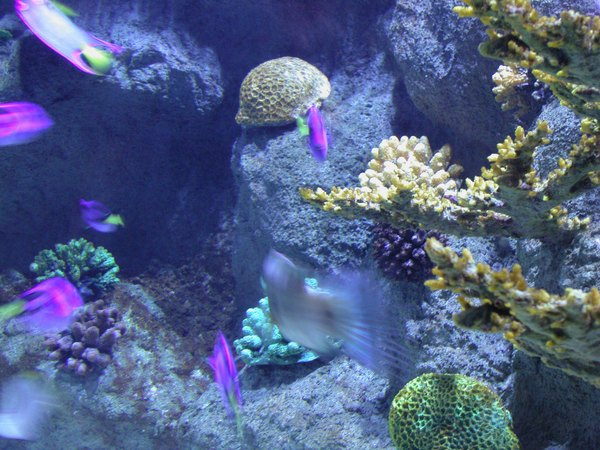 Many organisms like plants and coral need powerful lighting to survive. & Do LED Marine Aquarium Lights Work as Well as Fluorescent Lights ... azcodes.com