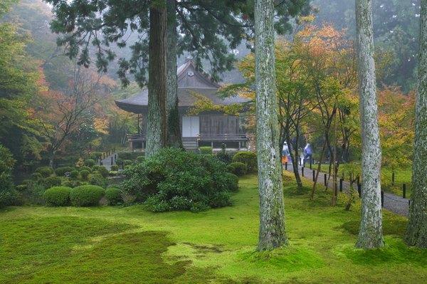 Existen ejemplos de arquitectura que incorporan el medio ambiente de forma natural.