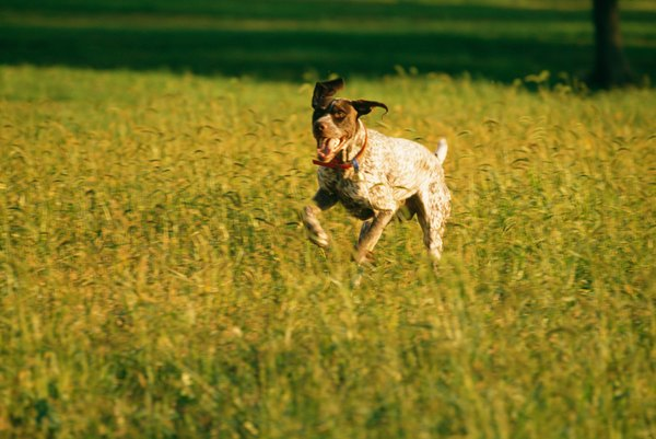 Dogs who know to come when called can more safely run off-leash.
