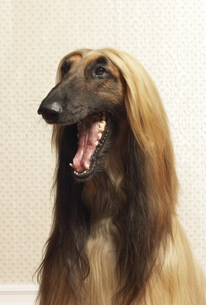 How to Make Your Dog Healthy and Shiny Hair?