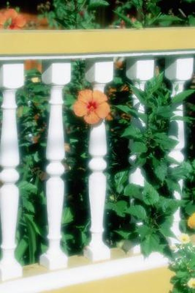 How To Trim Down A Hibiscus To A Bush Plant Home Guides Sf Gate