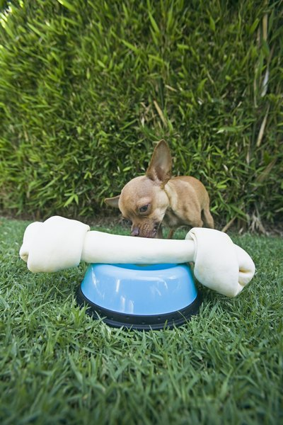 A big chew toy is useless to a tiny dog.