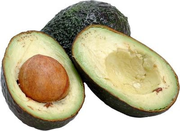 How To Grow A Hass Avocado Tree In A Container Home Guides Sf Gate