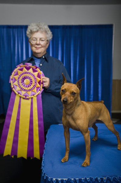 Teach a dog to gait with its head up by making it fun and the ribbons will follow.