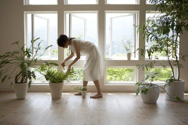 Cuando riegues tu planta, asegúrate de que el agua no escurra de los hoyos que se encuentran en la parte inferior de la maceta.