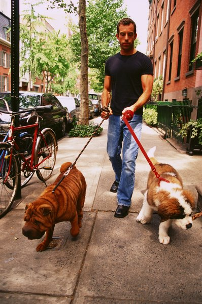 A broken collar can be a real hazard when you are walking your dogs in a busy area.