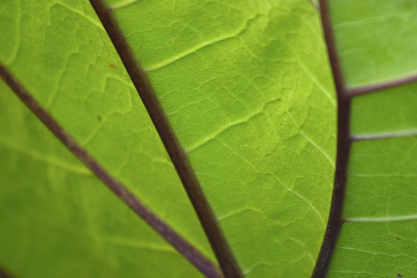 Plants create food by photosynthesis.