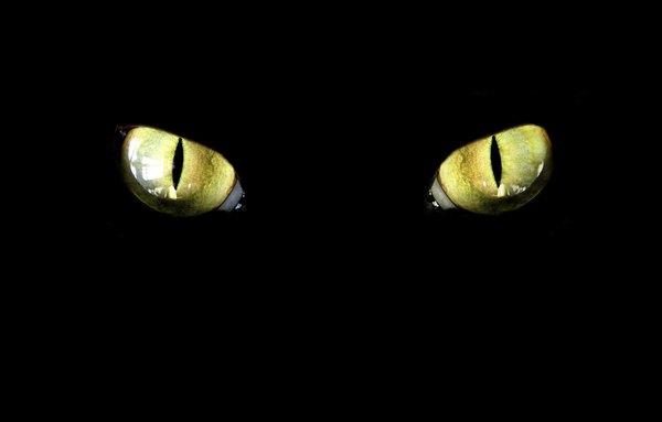 Existen animales tan extraños que no parecen reales.