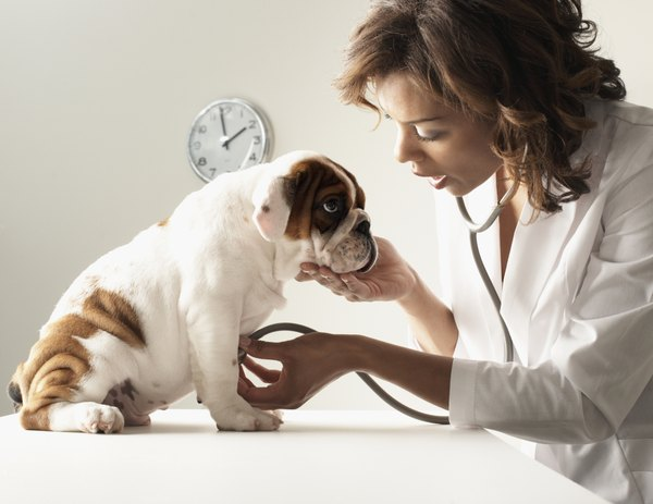 Routine testing is essential to determine if your pooch's heartworm medication is working.
