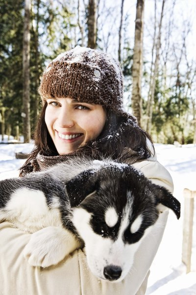 Husky or Malamute? Learn the differences before choosing your snow-loving companion.
